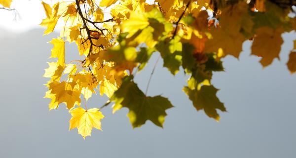 Goldene September-Wochen